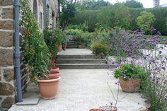 Chateau Moorhen: My top garden plants - Verbena bonariensis