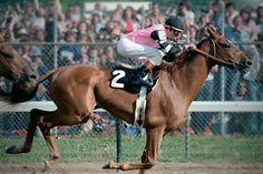 Affirmed - 1978 Triple Crown winner