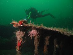 If SCUBA diving Vancouver Island is on your bucket list, be sure to check out these 3 amazing sites that hold the best the region has to offer!