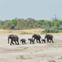 A family herd of #elephants in Hwange National Park, #zimbabwe