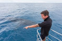 Australian soccer legend, Harry Kewell, gets up close and personal with our Hervey Bay Humpback whales.  He even managed to try our new swimming with the whales experience aboard Quick Cat II. Cruises leave Kingfisher Bay Resort daily from 1 Aug til 31 Oct.  Humpback Whale Watching in the calm waters on the lee side of Fraser Island   Photo: Andrew Tallon  #whalesherveybay #fraserisland #queensland #australia #humpbackwhales #whalewatching http://www.whalewatch.com.au/ www.queensland.com/wha...