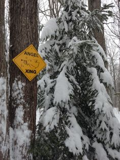 Jan Painter, Staunton 	 a reminder of my mother whenever I leave the driveway. #WHSVsnow