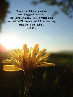 Very little grows on jagged rock.  Be grounded.  Be crumbled ... so wildflowers will come up where you are. ~~ #Rumi #Quotes