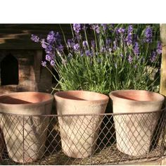 Pots Planters and Urns/Antiqued Pots at the Wairere Nursery Online Shop