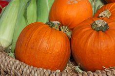 Thanksgiving Logic Puzzles for Beginners Detox Tips, Detox Recipes, Smoothie Recipes, Vegan Recipes, Pumpkin Pie Bars, Pumpkin Pumpkin, Logic Puzzles, Jigsaw Puzzles, Healthy Detox