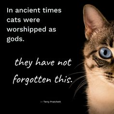 This quote from Terry Pratchett sounds like every cat we've met! #Quotes #LOL