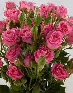 🍃🌹🍃Roses🍃🌹🍃 Beautiful Flowers Wallpapers, Beautiful Rose Flowers, Pretty Flowers, Pink Roses, Pink Flowers, Montreal Botanical Garden, Most Popular Flowers, Rosa Rose, Special Flowers
