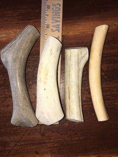 Genuine Deer Antlers jewelry craft Multi Species  Combo Pack E15 #RockyMountain
