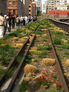 THE HIGH LINE | MANHATTAN | NEW YORK CITY | USA: *Opened: 2009; 1.45miles (2.33km) long landscaped park created on a disused section of elevated rail line*