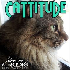‎Cattitude - Cat podcast about cats as pets on Pet Life Radio (PetLifeRadio.com): Cattitude - Episode 131 Preventing Cat-astrophes During the Holidays on Apple Podcasts Critical Care, Pet Life, Cute Animal Pictures, Cat Lovers, Cute Animals, Kitty, Flan, Learning, Pets
