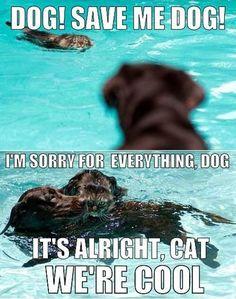Good Guy Dog