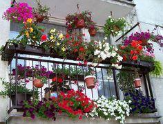 Rozkvetlá zahrádka za okny, pastva pro oko! Jaké rostliny zvolit do truhlíků?