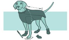 Winterize Your Dog - learn how to prepare your dog for cold temps and tricky terrain.