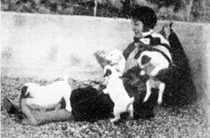 Elizabeth von Armin e i suoi cuccioli