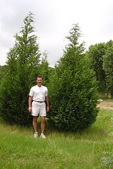 Leyland Cypress: fast growth rate of 3 feet or more a year make it the most popular of the Living Fence options. Provides a dense privacy barrier and help soften noise from adjacent properties or roads. Leyland cypress grow best in full sun. Privacy Landscaping, Outdoor Privacy, Garden Yard Ideas, Garden Trees, House Landscape, Landscape Plans, Evergreen Trees, Trees And Shrubs, Leland Cypress
