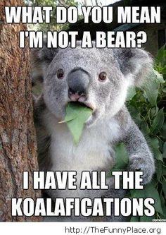 I'm not a bear