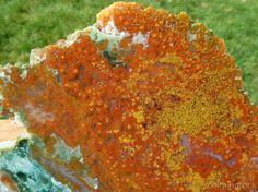 TCR Orbicular Ocean Jasper Agate lapidary Cabs Slab Outstanding Colors 251 Gram | eBay