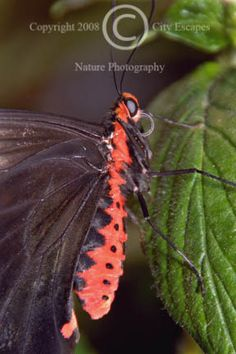 Limited Edition Nature Art Print. Hard to Hide -- Butterfly. Wildlife photograph:  Insects, Smithsonian, Washington, D.C., Butterfly, Insects