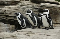 Sip for the Sea---A Benefit for the wildlife conservation society's New York Aquarium