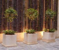 Ca as bambu tacuara colocacion sin cargo techos cercos for Jardin vertical mercadolibre