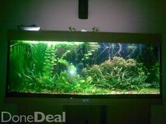 picture of fish tank with black gravel | juwel rio 400 aquarium ... - Decorazioni Juwel