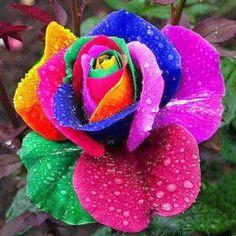 Colorful Flower by Junaid Raza