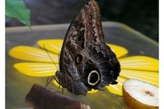 Homemade Butterfly Feeder to Attract Butterflies   eHow