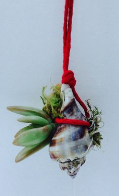 Handpicked shells host homegrown succulents or locally sourced air plants to beautify and purify your space, while adding nature to your home/garden