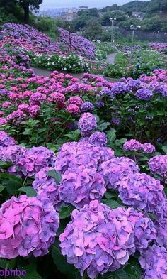 A Mantis Compos-Twin Evaluate - Improved Composting While In The City Setting Mother Nature At Her Best Stunning Enjoy Hortensia Hydrangea, Hydrangea Care, Purple Flowers, Beautiful Flowers, Dream Garden, Amazing Nature, Garden Inspiration, Botanical Gardens, Champs