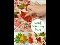 Make gorgeous LEAF SENSORY BAGS. A super sensory play idea for kids that connects them with Nature. Oil, water and leaves mix to make stunning sensory play! Sensory Bags, Sensory Bottles, Baby Sensory, Sensory Play, Fall Preschool Activities, Sensory Activities, Infant Activities, Preschool Curriculum, Preschool Science