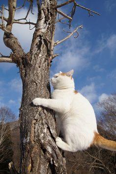 shironeko climbing