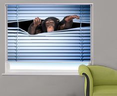 This cheeky monkey is peeking through the window blind to see whats going on. Have this very funny window blind in your home or office and have your own peeking monkey. Window Blinds & Shades, Blinds For Windows, Print Pictures, Animal Pictures, Engraved Beer Mugs, Blackout Blinds, Roller Blinds, Front Door Decor, Buy Prints