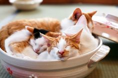 Cats in a cray pot 猫鍋