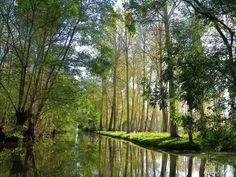 Bonjour, Aujourd'hui, je vous propose de vous détendre, de monter dans une barque ou dans un canoé, ou simplement, de suivre un joli chemin, et d'aller rêver au fil de l'eau de ces marais qui semblent avoit toujours été là alors qu'ils sont une complète... Visit France, Life Is A Journey, Countryside, Globe, Charentes, Nature Water, Landscape, City, Awesome