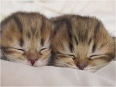 Two cute!  Too cute!