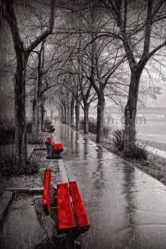 A splash of color on a rainy day! Black And White Colour, Black White Photos, White Art, Splash Photography, Black And White Photography, Red Bench, Color Splash Photo, Shades Of Red, Rainy Days