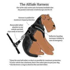 Harness features illustration