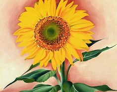 A Sunflower from Maggie - Georgia O'Keeffe, 1937