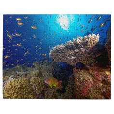 This amazing jigsaw puzzle showcases the awesome variety of soft and hard corals as well as the abundant schools of tropical fish found on Australia's Great Barrier Reef. #coral #reef #ocean #sea #diver #tropicalfish #greatbarrierreef #coralsea #coralreef #nature