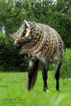 PRE Stallion DEVORO