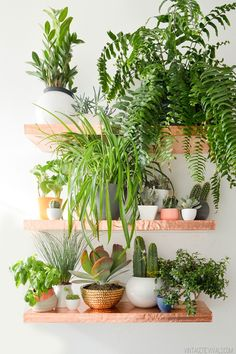 A vertical garden doesn't have to be outside — and this project works for both indoors and outdoors. Mandi of Vintage Revivals was inspired by shelves found at Anthropologie and created her own with copper sheeting and wooden boards. A variety of vessels and plants line the shelves to create a chic, overgrown look. See the tutorial »   - HouseBeautiful.com