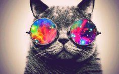 hipster tumblr cat