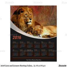 2016 Lion and Lioness Resting Calendar Poster