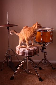 Percy is ready to jam. DIY Drum Throne Cover on the blog