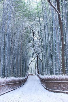 Kyoto bamboo snow forest at Sagano