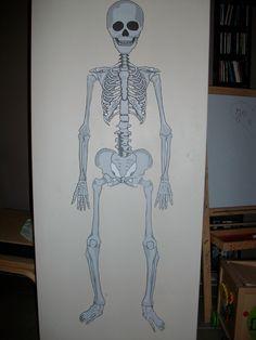 Les os du squelette : Construire un squelette d'1m de haut - Montessori EtCie