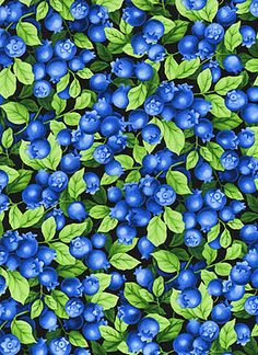 Timeless Treasures Blueberry Fabric Fruit-C9144-Black    It's been a long while since I've seen a blueberry fabric as nice as this one!