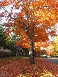 Autumn: Looking Inward