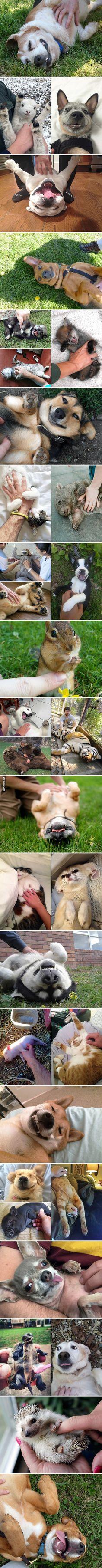 Just some animals enjoying belly rubs