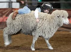 Mutton-bustin' at the Houston Livestock Show and Rodeo. Never know whether to call PETA or CPS, but it's one of the cutest/funniest few minutes there is.
